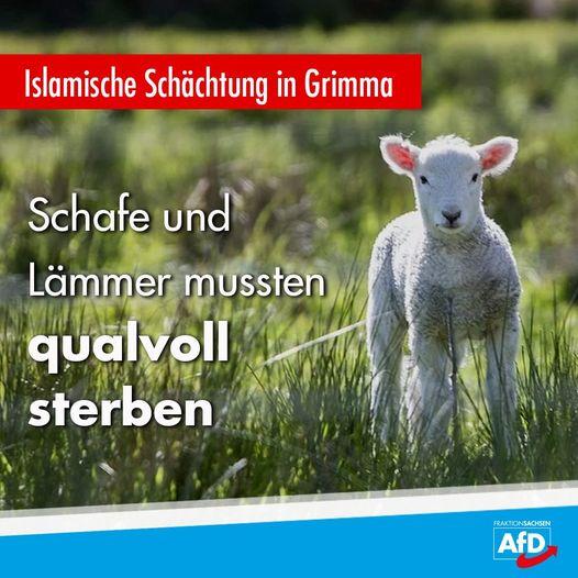 Islamische Schächtung in Grimma